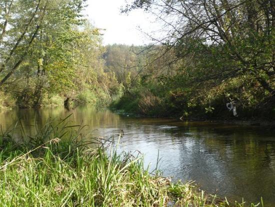 Spływ Drzewiczką