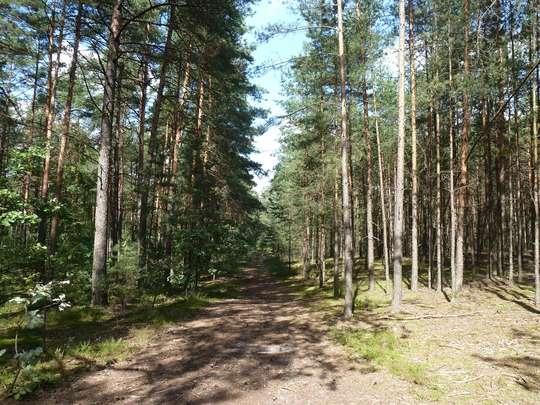 Wędrówka piesza przez Lasy Otwockie